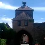https://www.vins-kamm.fr/photos-vins-kamm-alsace/tour-blienschwiller-dambach-ville/